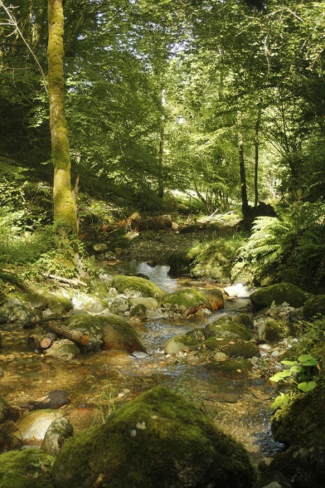 Photographie du ruisseau du Rossignol à Milhas